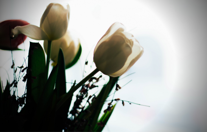 tulipomania: la primera burbuja económica